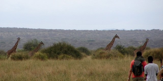 Close encounters with Giraffe.
