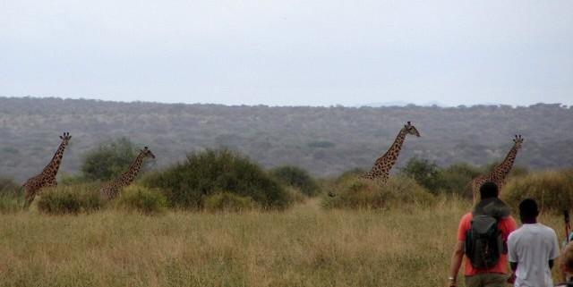 Close encounters with Giraffe.