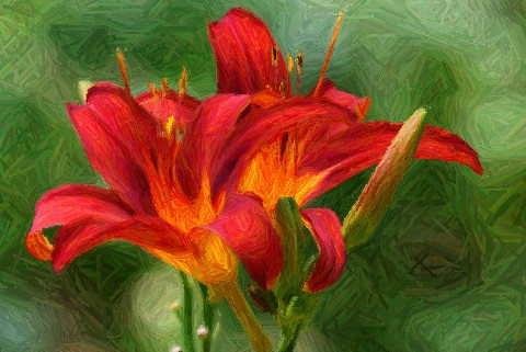 Fire Lilies - deep orange lilies set against a green grass background.