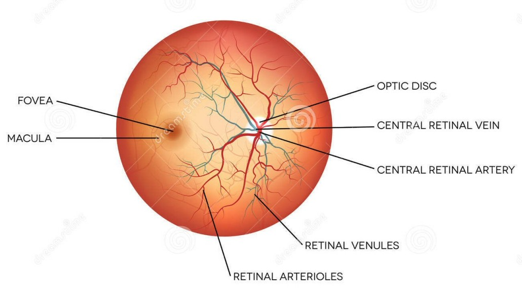 Physician's view of the retina