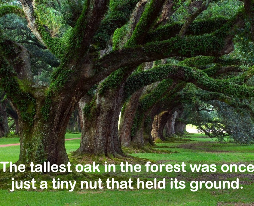 """Quote laid below an image of an avenue of flourishing oak trees. Quote: """"The tallest oak in the forest was once just a tiny nut that held its ground."""""""