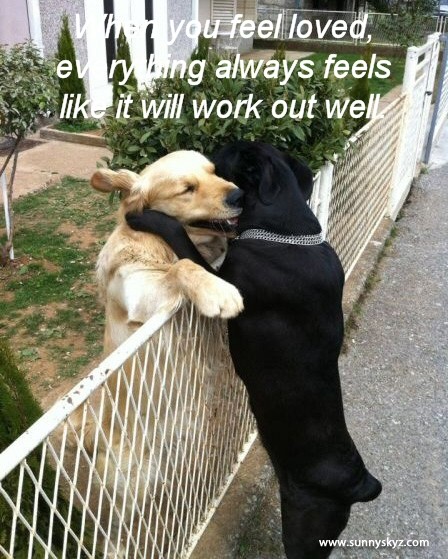 "Quote above a photo of two lab-retrievers, (one golden, one black), embracing over a low fence. Quote: ""When you feel loved, everything feels like it will work out well."""