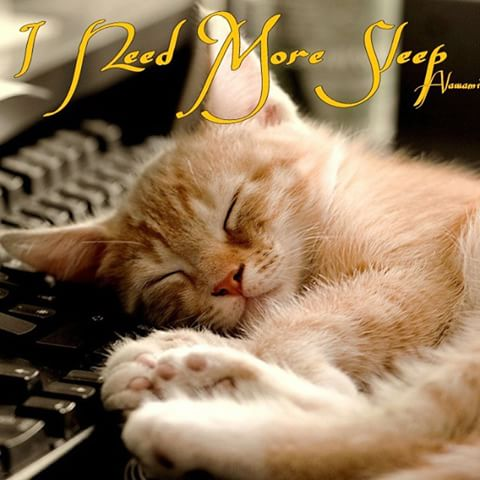 """""""I need more sleep."""" Cat sleeping with head rested on a typewriter."""
