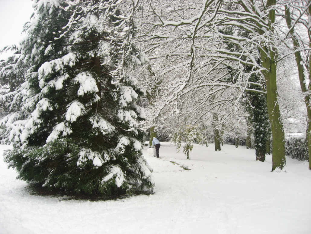 Deep fresh snow covers a community park, heavily coating conifers, and giving a new glow to bare branches.