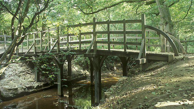 A simple wooden footbridge spans a small river gently flowing through lush forest.