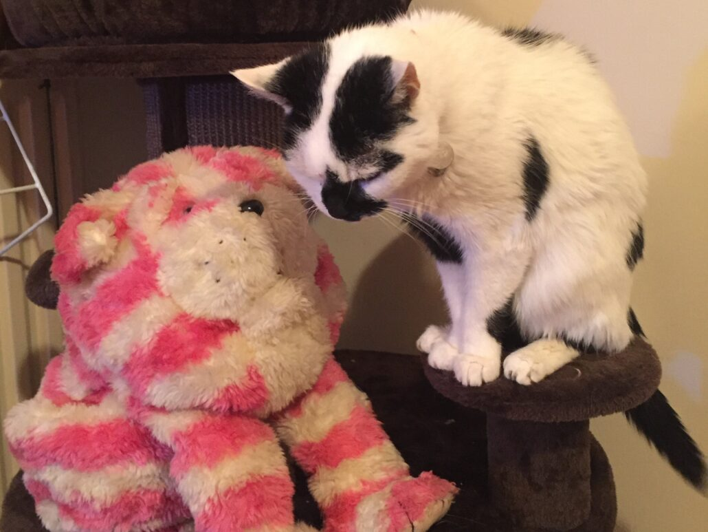 A pretty cream cat with a black tail and a few black markings, including a teardrop marking over her nose, is sitting on a stepping post of her climbing unit, leaning down towards Bagpuss, an old pink and cream striped cloth cat, who appears to be looking up towards her.